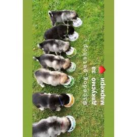 Ошейники маркеры для щенков
