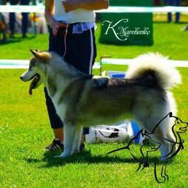 Ринговка для  собак