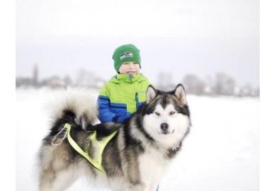 Нужна ли ребенку собака?