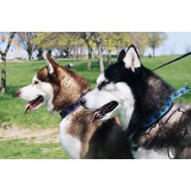 """Ошейник для собаки полуудавка """"PAWS'"""