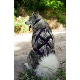 Ездовая шлейка ICE-DOG